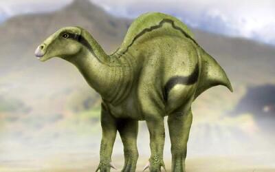 Ve Španělsku byl nalezen nový druh dinosaura. Na zádech měl záhadný hrb, jehož funkce mate i vědce