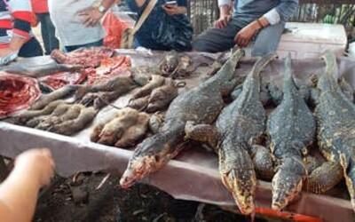 Ve Wu-chanu zakázali lov, chov a konzumaci divokých zvířat na 5 let. Bude to stačit?