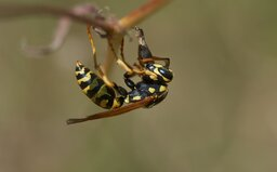 Vědci bijí na poplach, celé populace hmyzu prý vymírají. Takto jim můžeš pomoci