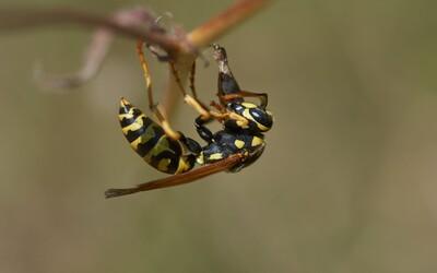 Vedci bijú na poplach, celé populácie hmyzu vraj vymierajú. Takto im môžeš pomôcť