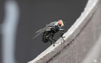 Vedci dokážu laserom ovládať libido muchy