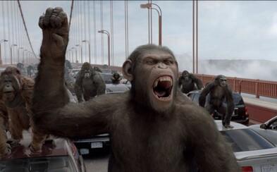 Vedci implantovali ľudské gény do opičieho mozgu. Primáty sa stali inteligentnejšími, tvrdí výskum