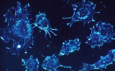 Vědci možná rakovině zasadili poslední úder. Nejnověji proti ní bojují uměle vytvořenými viry s neuvěřitelnou úspěšností