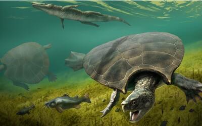 Vedci našli pozostatky zrejme najväčšej korytnačky na svete, bola veľká ako auto