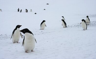 Vedci objavili superkolóniu 1,5 milióna tučniakov, o ktorej doteraz nevedeli. Na ostrove pri Antarktíde ich zachytili z vesmíru