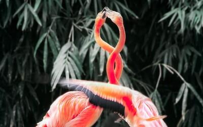 Vědci ověřují novou hypotézu, předpokládají, že zvířata byla odjakživa bisexuální