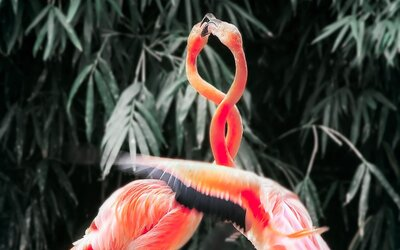 Vedci overujú novú hypotézu, predpokladajú, že zvieratá boli odjakživa bisexuálne