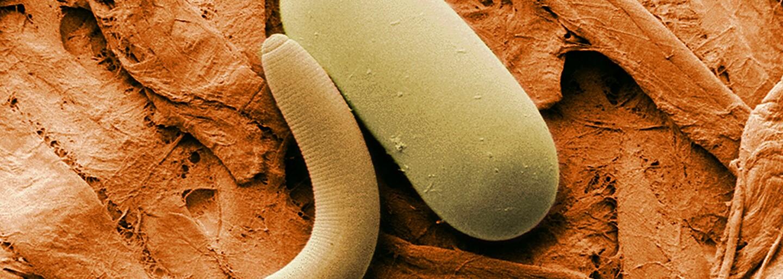 Vedci oživili 42 000 rokov staré červíky. Podarí sa rovnako uchovávať aj ľudí?