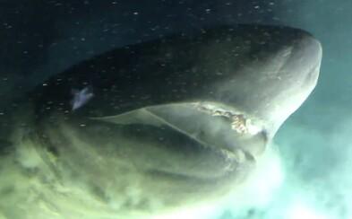 Vedci skúmajú prehistorického žraloka so svietivými očami, ktorý žije viac než 2 kilometre pod hladinou