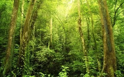 Vědci spočítali, kolik stromů se nachází na Zemi. Výsledek překvapí