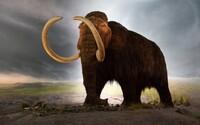 Vědci vrátí do přírody mamuty. Známá genetická firma na to vybrala v přepočtu 322 milionů korun