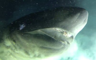Vědci zkoumají prehistorického žraloka se svítivýma očima, který žije přes 2 kilometry pod hladinou