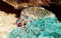 Vědci zkoumali živočichy z nejhlubších míst oceánu. Každý z nich měl v sobě alespoň malý kousek plastu