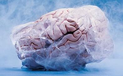 Vedci zmrazili mozog králika na -135 stupňov. Po úspešnom rozmrazení bol v takmer bezchybnom stave