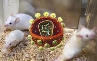 Vedcom sa podarilo po prvýkrát v histórii eliminovať vírus HIV na myšiach. Ďalším cieľom sú primáty