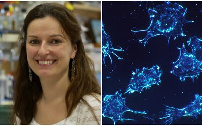 Vedkyňa zo Slovenska objavila bielkovinu schopnú zastaviť rakovinu. Teraz je jej snom otvoriť si v Prahe laboratórium