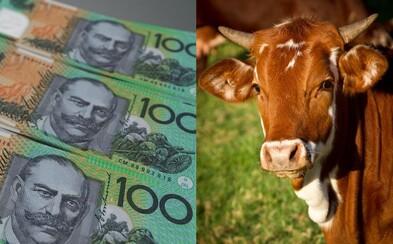 Vegáni sa na internete rozčuľujú nad tým, že bankovky môžu obsahovať živočíšny tuk