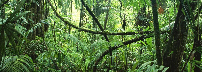 Veganka odešla žít do džungle a své dny tráví nahá. Banánová dívka dala výpověď, protože nechtěla pracovat jako otrok