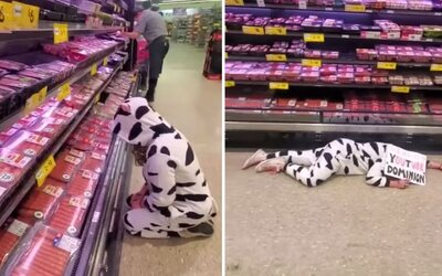 Vegánska aktivistka v kostýme kravy prišla oplakávať mäso v supermarkete. Boli ste oklamaní, vyhlasovala