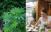 Veganská restaurace začíná nabízet marihuanové pokrmy. Chce vyvrátit mýty o využití zelené rostliny