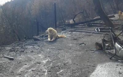 Věrný pes čekal po požáru měsíc na místě shořeného domu. Věřil, že se majitelé vrátí