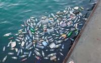 Většina ryb v Atlantském oceánu má v sobě plastové částice. Ve 233 zkoumaných rybkách našli vědci 452 úlomků plastů