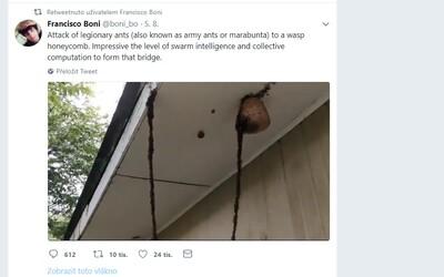 Viac ako 1 milión agresívnych mravcov marabunta spravilo živý most, aby mohli napadnúť osie hniezdo