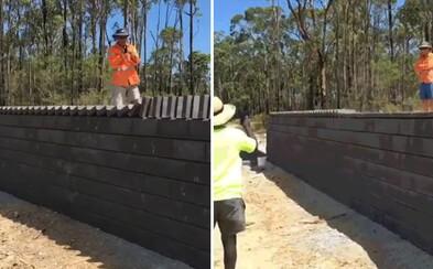 Videl si už väčšiu pracovnú efektivitu? Šikovní austrálski murári nechali tehly spraviť ich prácu vďaka pôsobivému efektu