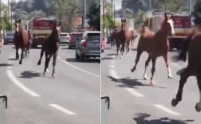 VIDEO: Bratislavou sa preháňajú kone, ktoré vypustili z horiacej stajne