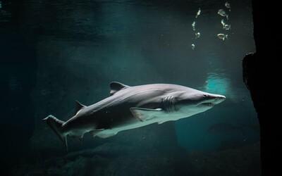 VIDEO: Dovolenkári sa zľakli, na pobreží chorvátskeho ostrova Korčula sa objavil obrovský žralok