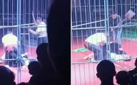 VIDEO: Medvěda v Číně bili tyčemi a lopatou po hlavě. Během vystoupení v kleci zaútočil na krotitele