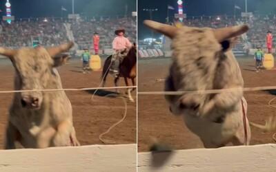 VIDEO: Rozzuřený býk se rozběhl k divákům a přeskočil plot. Lidé utíkali ze svých míst, nikdo se naštěstí nezranil