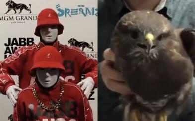 Video s jastrabom zabáva Twitter. Precíznu stabilizáciu vtáčej hlavy sa snažia napodobniť aj tanečníci