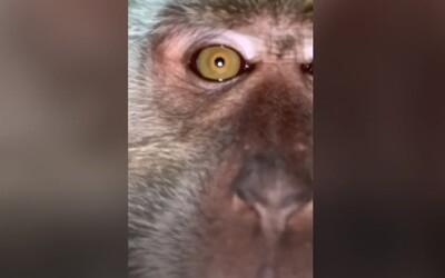 VIDEO: Student si myslel, že mu zloděj ukradl telefon. Našel na něm opičí selfies