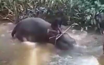 """Video: Týraný slon padá po úderech holí do řeky a """"pláče"""". Aktivisté kritizují rituály buddhistů ze Srí Lanky"""