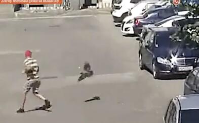VIDEO: V Malackách zaútočila na muža agresívna vrana. Musel pred ňou utekať