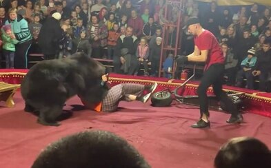 Video z ruského cirkusu zachytáva útok medveďa na jeho krotiteľa, ľudia v panike utekali preč