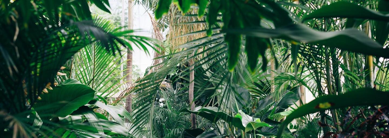 Vietnamský Tarzan zemřel. Prohrál boj s rakovinou jater