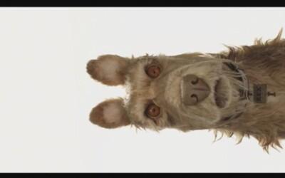 Vizionár Wes Anderson a nenápadný Edward Norton s humorom predstavujú režisérov nový animovaný film o zlatých psíkoch s hviezdnym obsadením