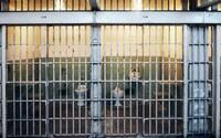Vlani spáchali vo väzbe samovraždu traja obvinení. Neúspešne sa v cele pokúsilo zabiť 17 ľudí