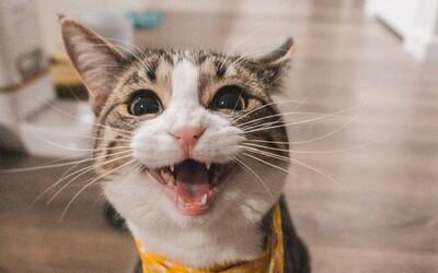 Vlastníš kočku? Podle vědců je pravděpodobné, že jsi ateista a nechodíš do kostela
