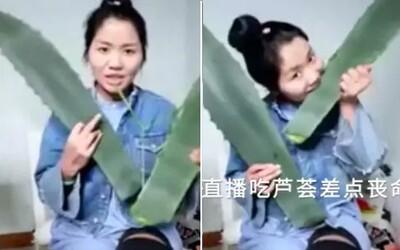 Vlogerka zjedla rastlinu, ktorú si pomýlila s aloe vera a skončila v nemocnici. Zhang sa v botanike zrejme nevyzná tak, ako sa tvári
