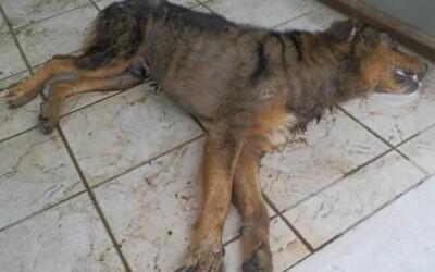 Vo Zvolene niekto psom podhadzuje jed. Toxická látka býva zamaskovaná napríklad vo fašírke