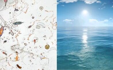 Není dobré polykat vodu z moře. Je plná larev, kůrovců, vajíček a jiných nechutností