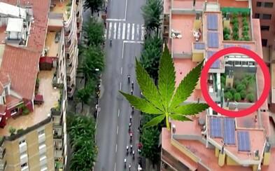 Vrtuľník odhalil plantáž marihuany na streche domu počas cyklistických pretekov