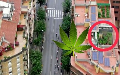 Vrtulník odhalil plantáž marihuany na střeše domu během cyklistických závodů