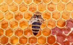 Všetci zomrieme 4 roky po tom, ako vymrú včely. Ako bude vyzerať temná budúcnosť?