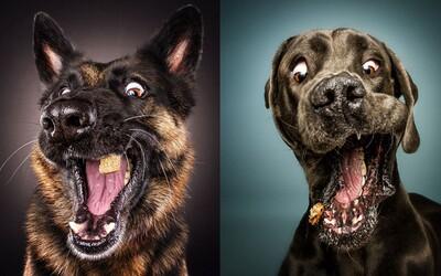 Vtipné momentky psíkov sekundu pred tým, než chytia letiacu dobrotu. Vedia sa tváriť smutne aj vášnivo