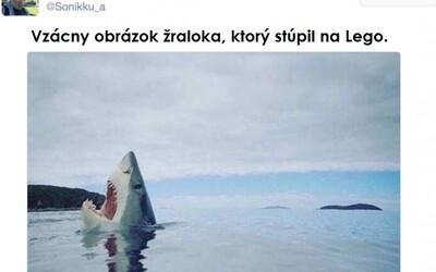 Vtipné tweety zlepšia aj pokazený deň. Ako vyzerá žralok, ktorý stúpi na Lego?