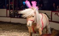 Výbor odhlasoval zákaz drezury volně žijících zvířat v cirkusech